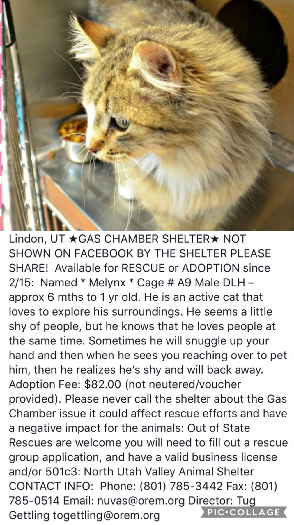 Pin By Amcurious Nj On Animal Protection 5 With Images Cats Tabby Cat Cat Adoption