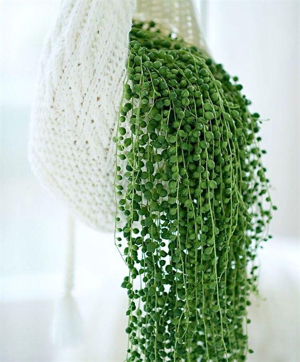 Wohnzimmerschrank Möbel Martin: Volle Erwtenplant #IndoorPlants