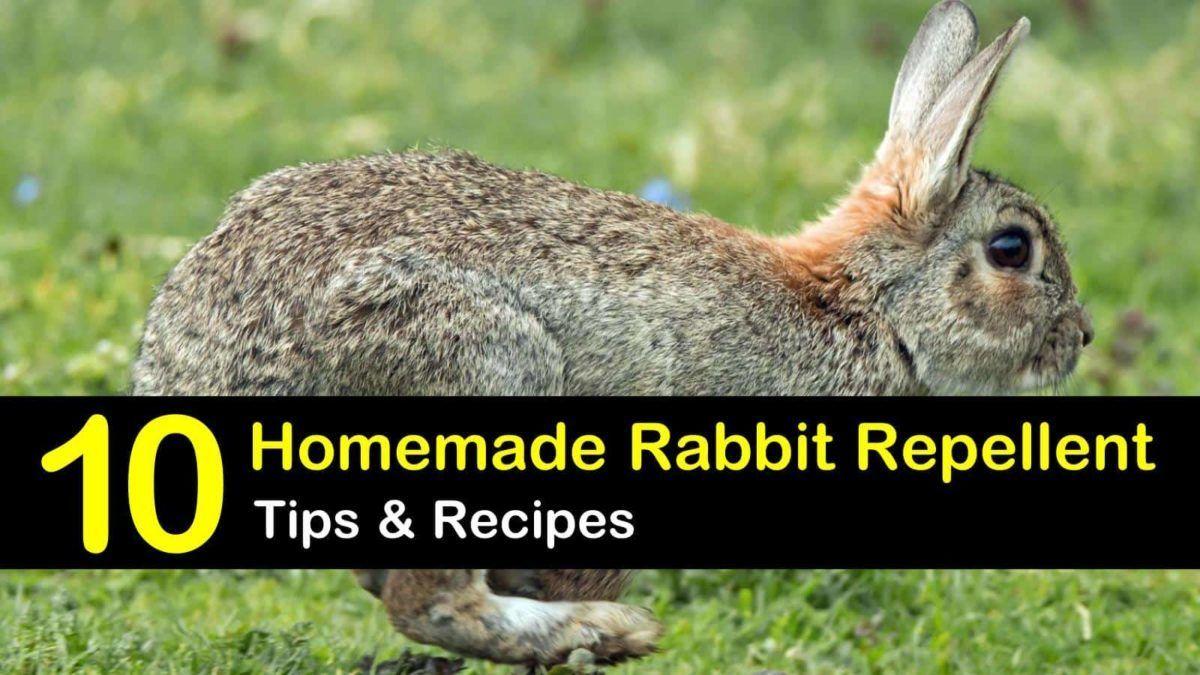 how to make a rabbit repellent