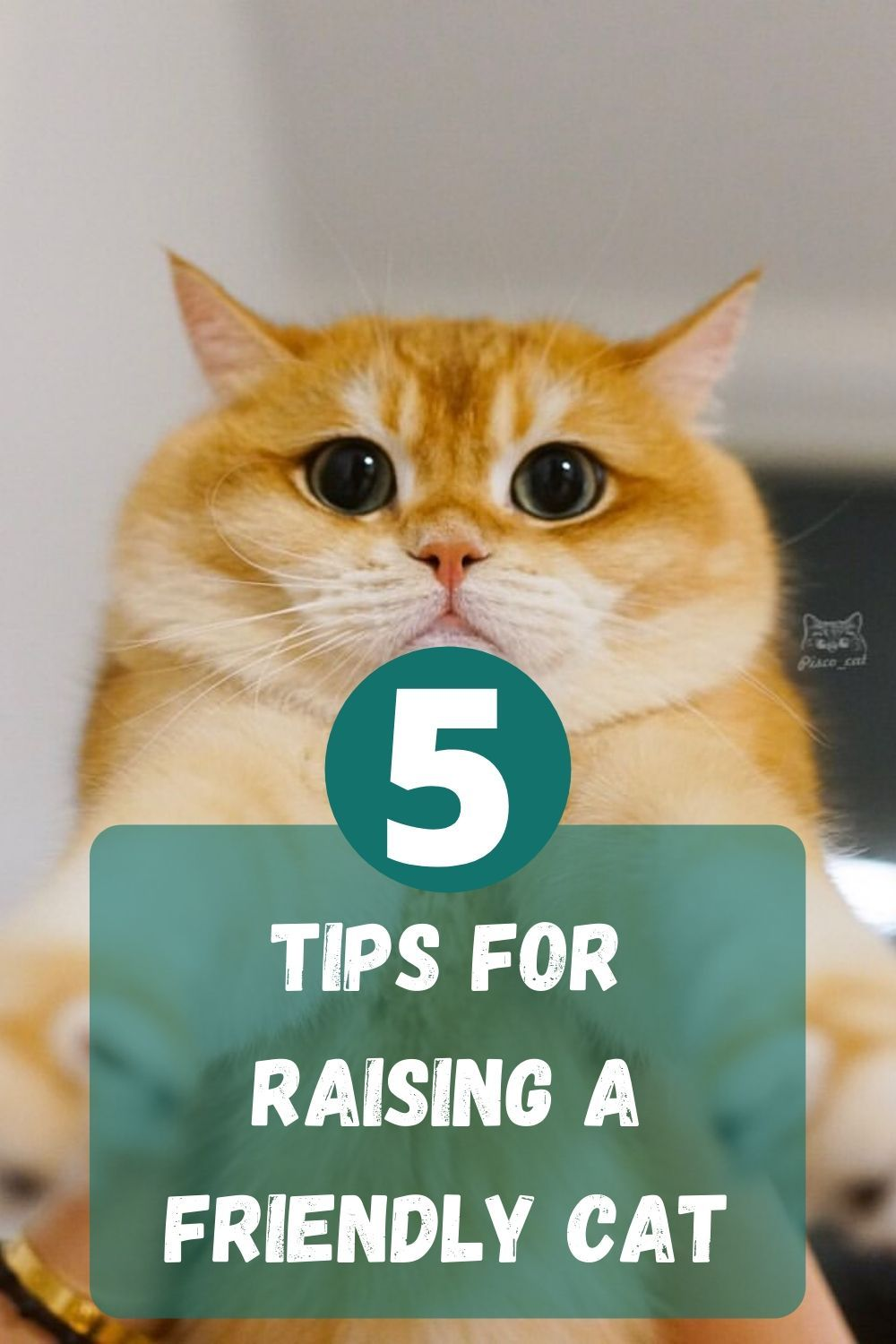 5 Tips For Raising A Friendly Cat Welfar4us In 2020 Cute Cats And Dogs Cute Baby Cats Baby Cats