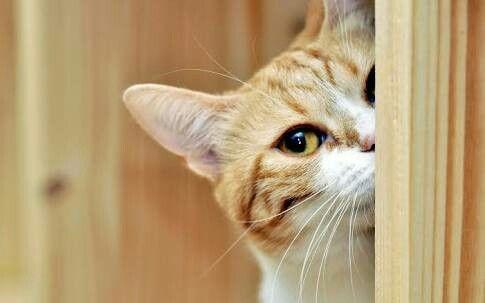 I'm watching!!!