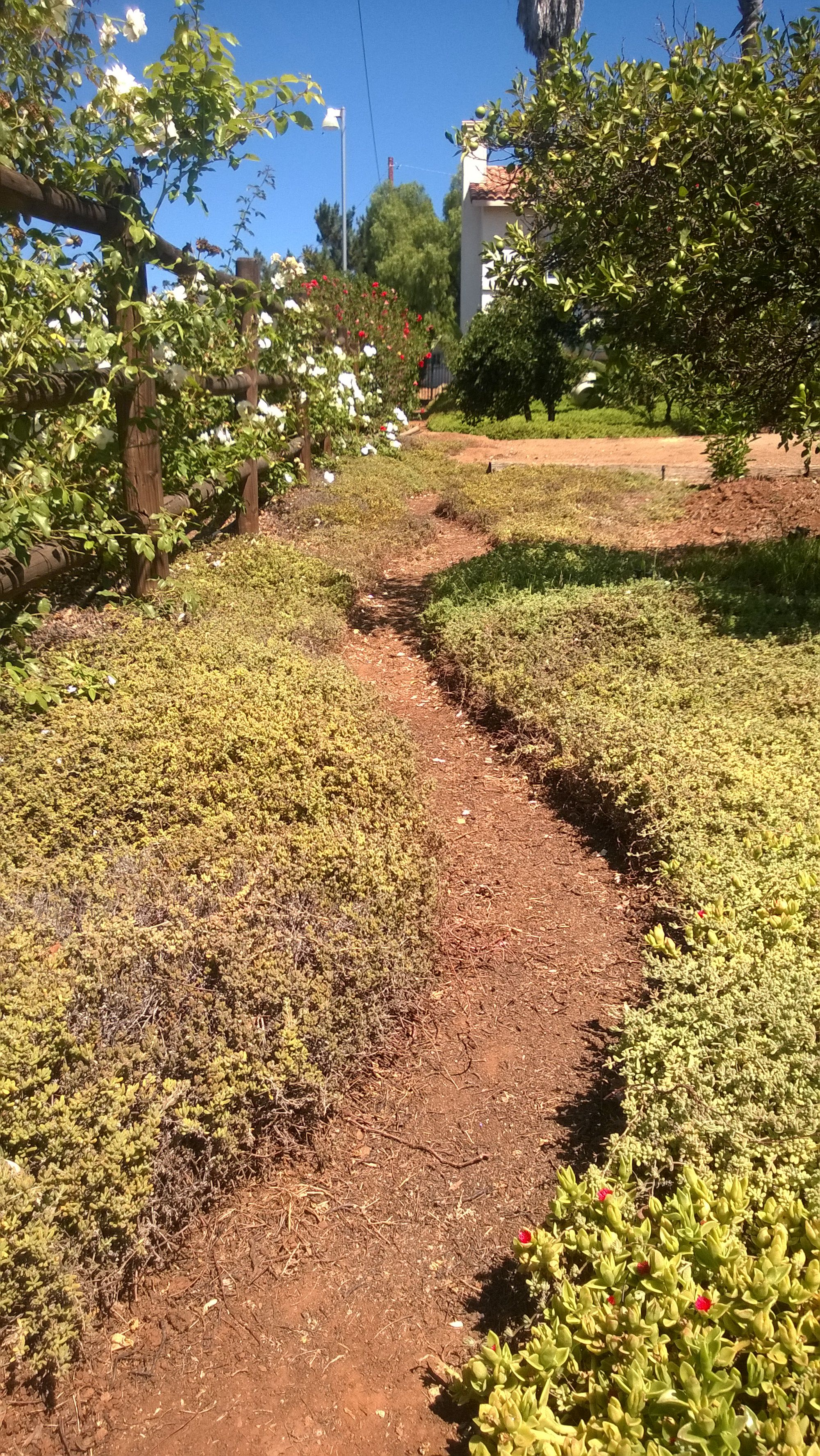 Latest garden project, cutting a winding path through the ...