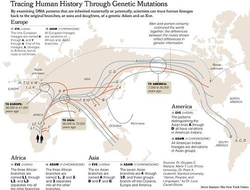 Tracing Human History Through Genetic Mutations By Steve Duenes