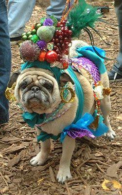Carmen Miranda Dog Costume Parade Tompkins Square Park Nyc