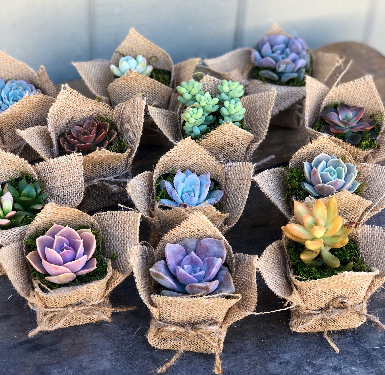13+ Succulent wedding favors rustic information