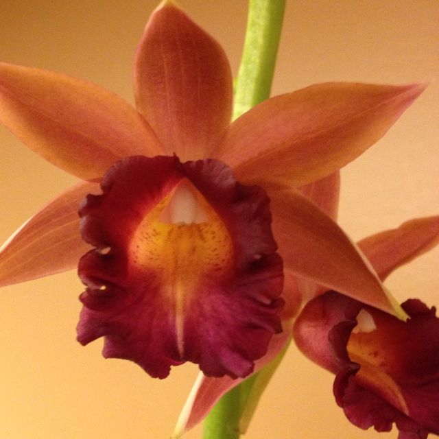 Day 20: orchids in the entryway