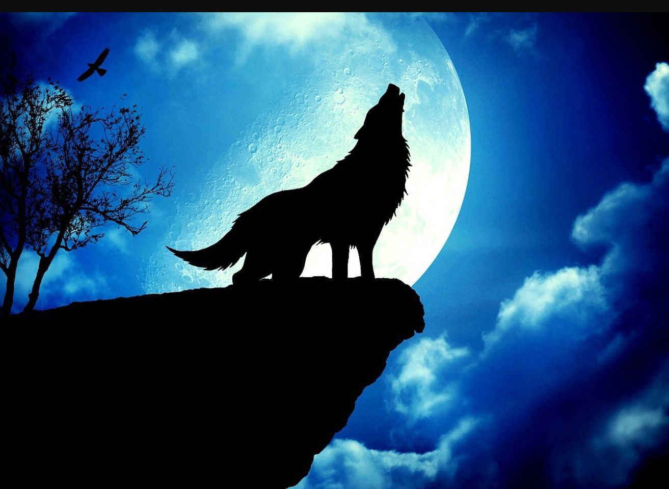 Animal Wolf Moon3d WallpaperWallpaper BackgroundsCancer MoonWolf HowlingWallpapers AndroidLive WallpapersHd
