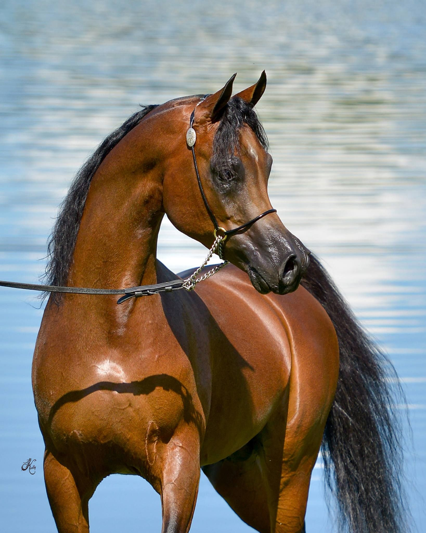 Facebook Heart Of A Horse Horses Beautiful Horses Arabian Horse
