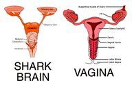 """i will now refer to my period as """"shark week"""" haha"""