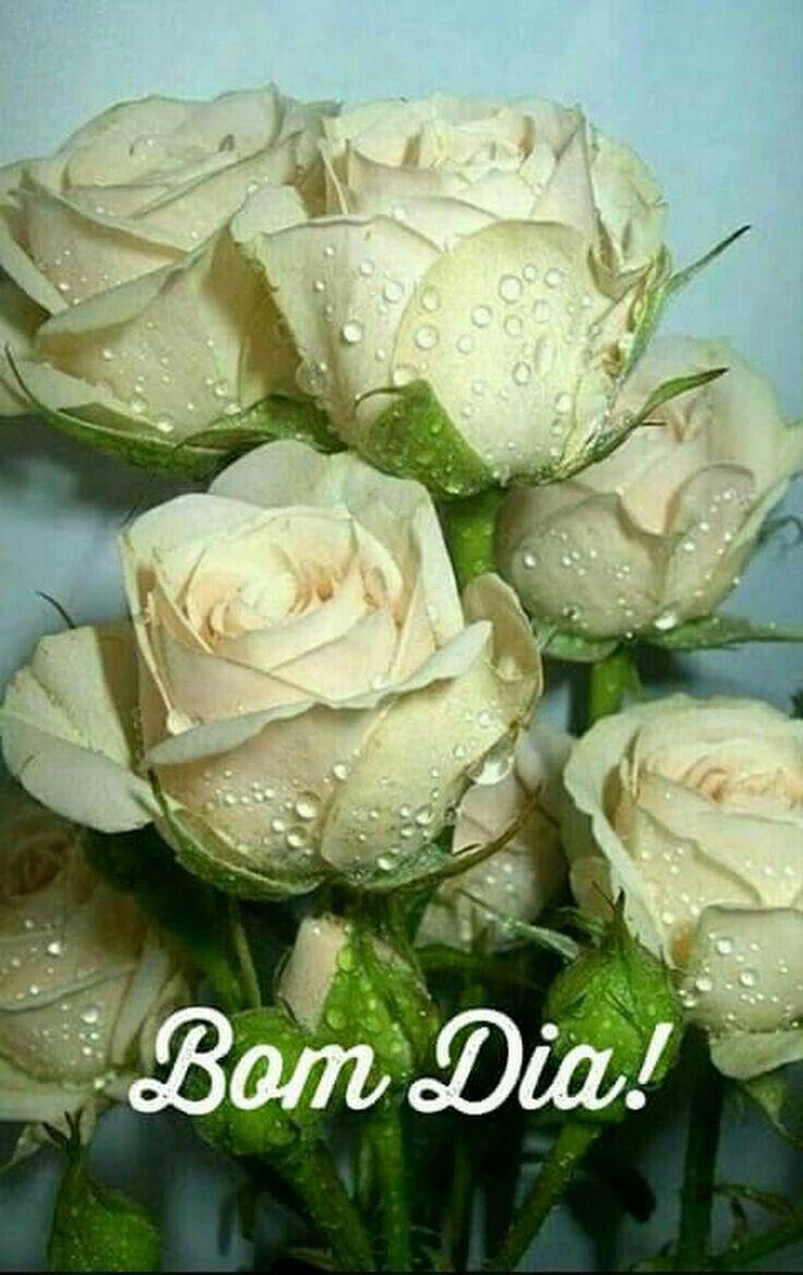 Pin De Bonnie Ward Em Bom Dia Rosas Lindas Melhores Flores