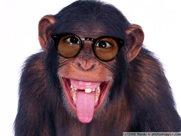 glasses monkey - Google zoeken   > AFFICHES in   Pinterest ...