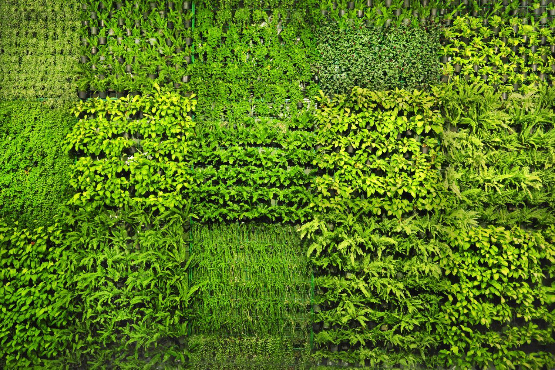 「plant Wall」的圖片搜尋結果