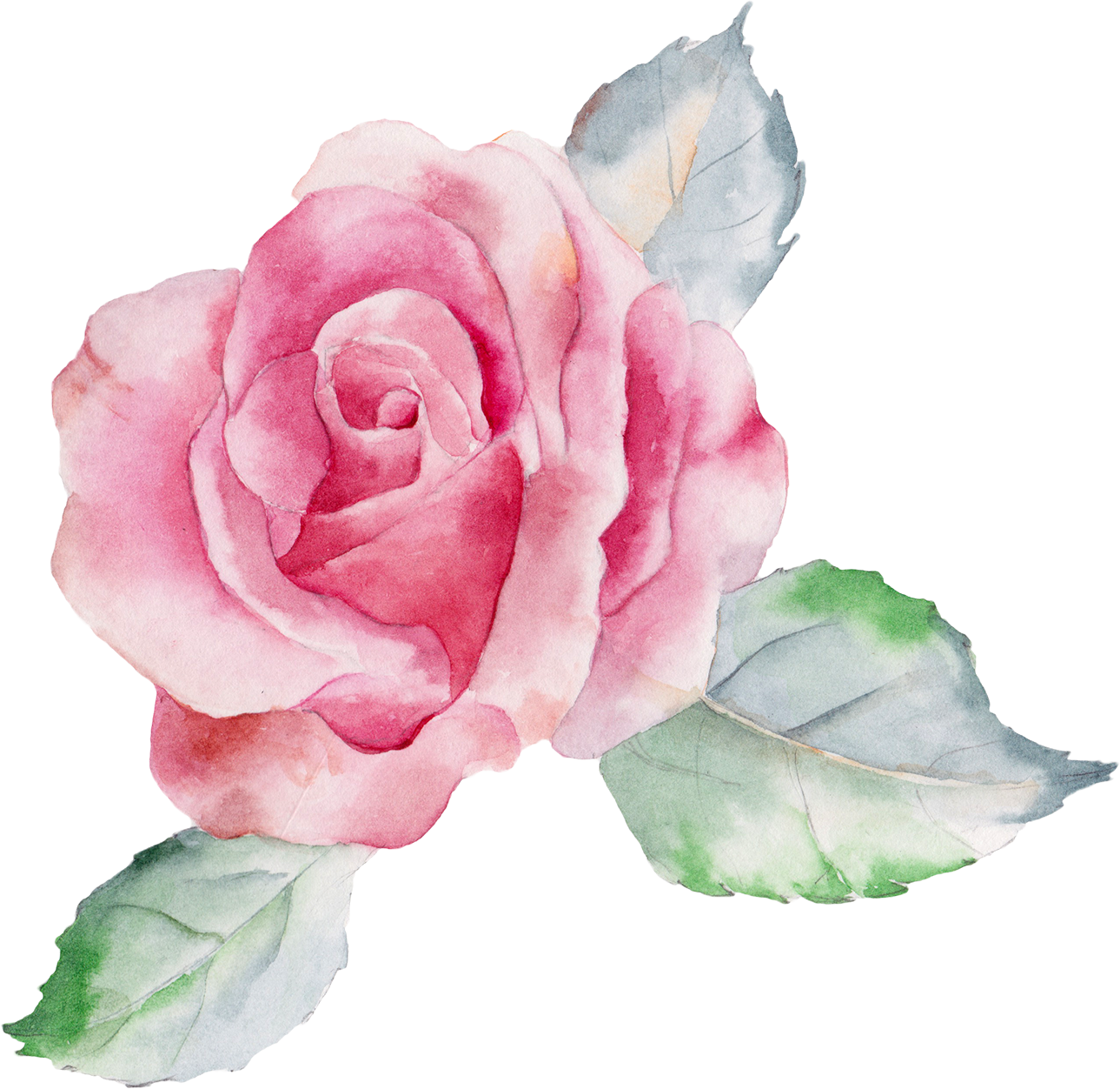 Роза рисунок акварелью на белом фоне