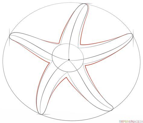 How to draw a starfish | Step by step Drawing tutorials ...