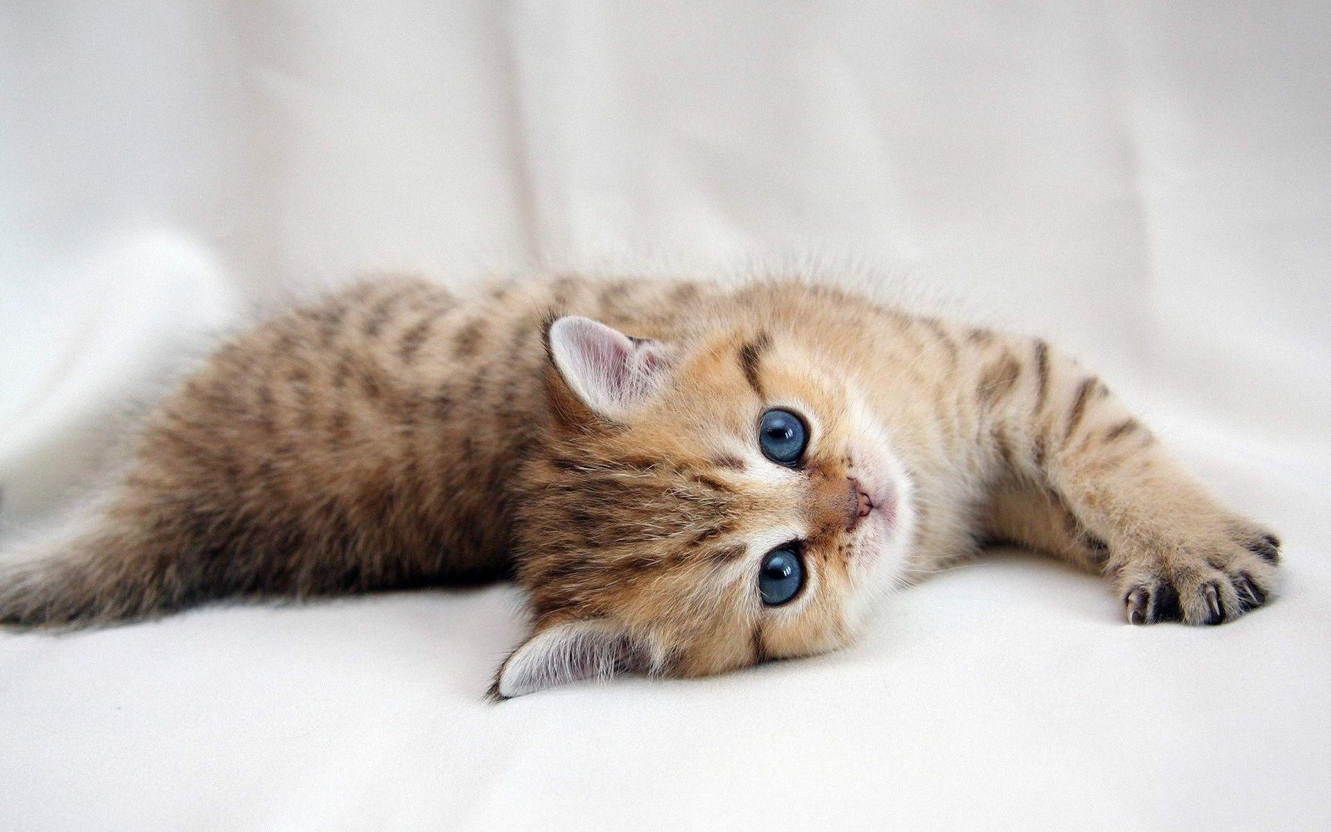 Cute Kitten Fluffy Kittens Kitten Wallpaper Cute Cats