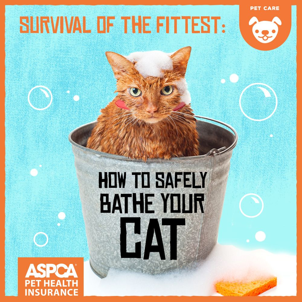 Survival of the Fittest How to [Safely] Bathe Your Cat