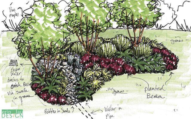 Seattle rain_garden_sketch   Garden Sketches   Rain garden ... on rain garden drawings, vegetable garden design sketch, rain garden construction plan view,