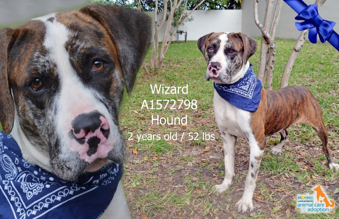 Hi my name is wizard and im available for adoption at