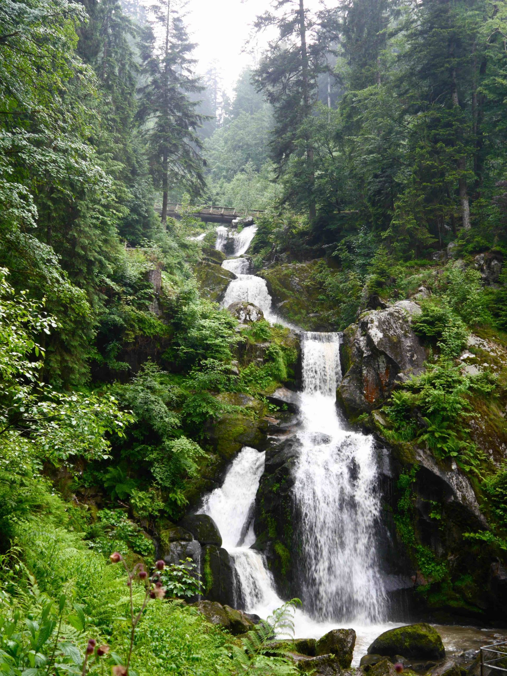 7 Amazing Things to do in the Black Forest, Germany