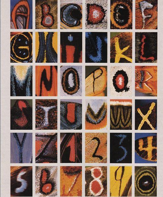 Alfabeto com mariposas!!