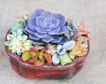 Artículos Similares A Step By Step PDF Instructions: Wall Mounted Succulent  Garden