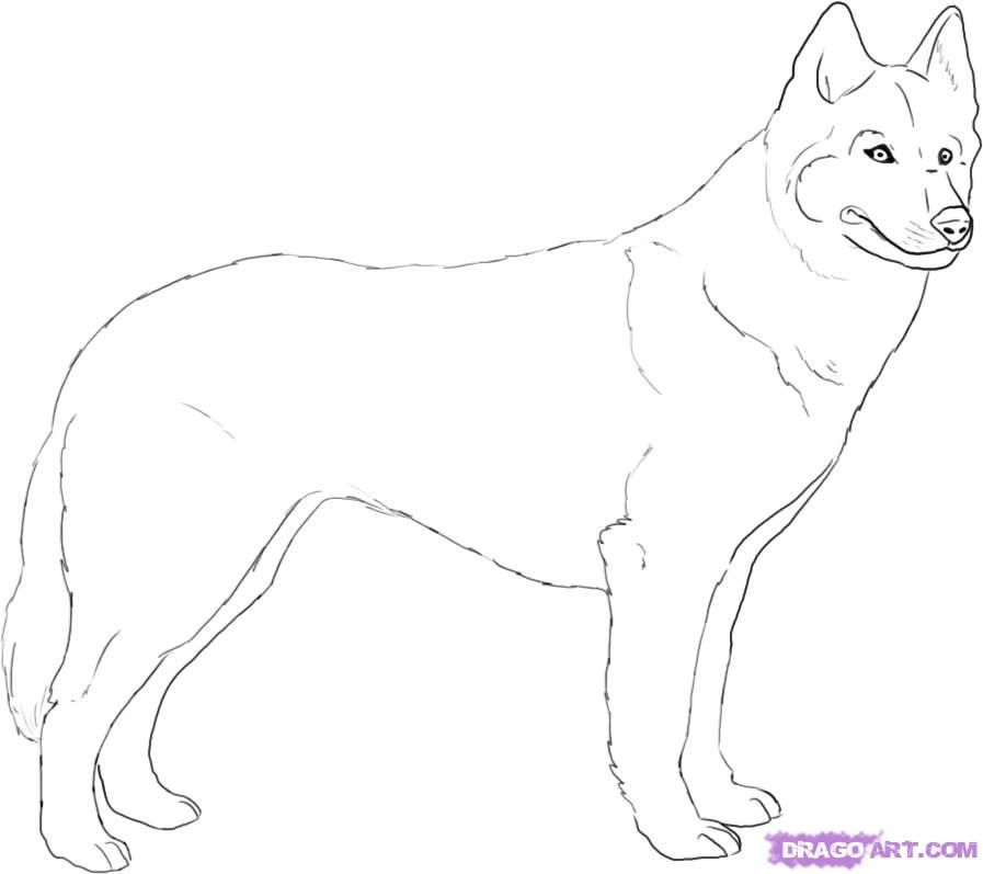 How To Draw A Husky By Dawn Husky Drawing Puppy Drawing Dog