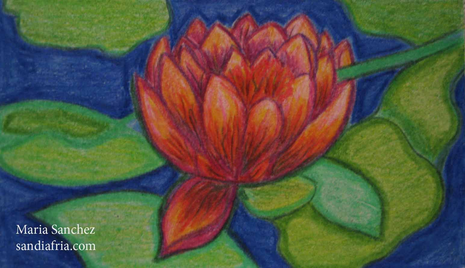 Lotus colored pencil drawing | Pinterest | Lotus and Drawings