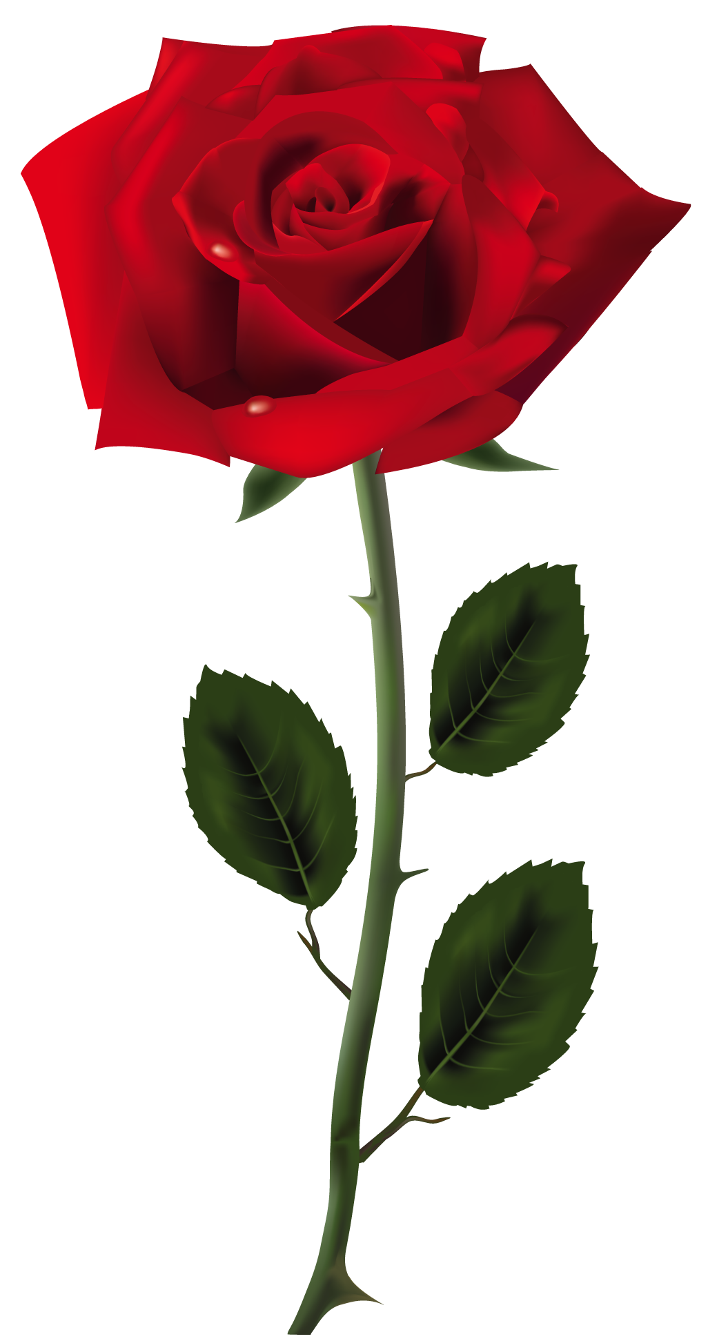 A Rose For Emily Red Rose Png Red Roses Rose