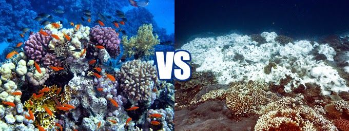Image Result For The Great Barrier Reef Bleaching Before