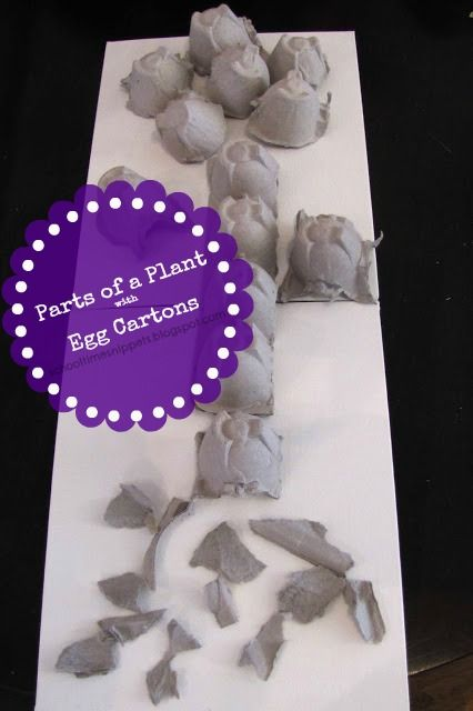 hands on science! learn parts of a plant using recycled material!