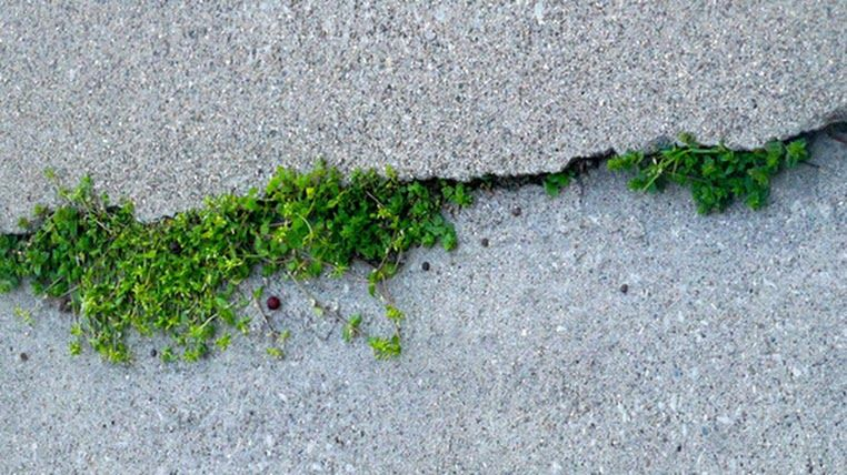 """Growth by Kim Manley Ort...""""Growing from the places where we open."""" www.365daysofinspiration.com"""
