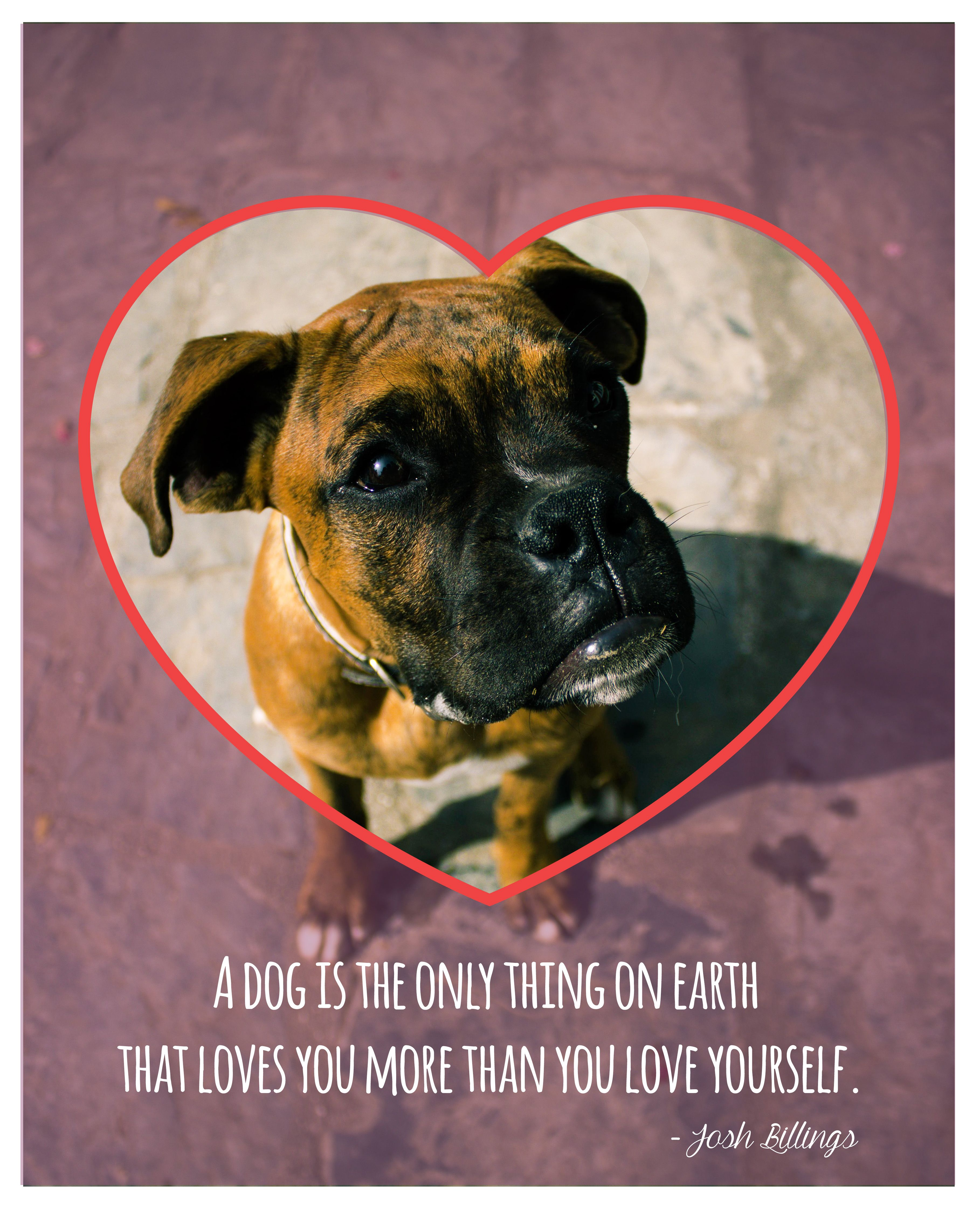 This Valentinesday Give Your Beloved Pets The Invaluable Gift Of