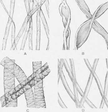 Magnified Fibres of Linen, Cotton, Wool, and Silk