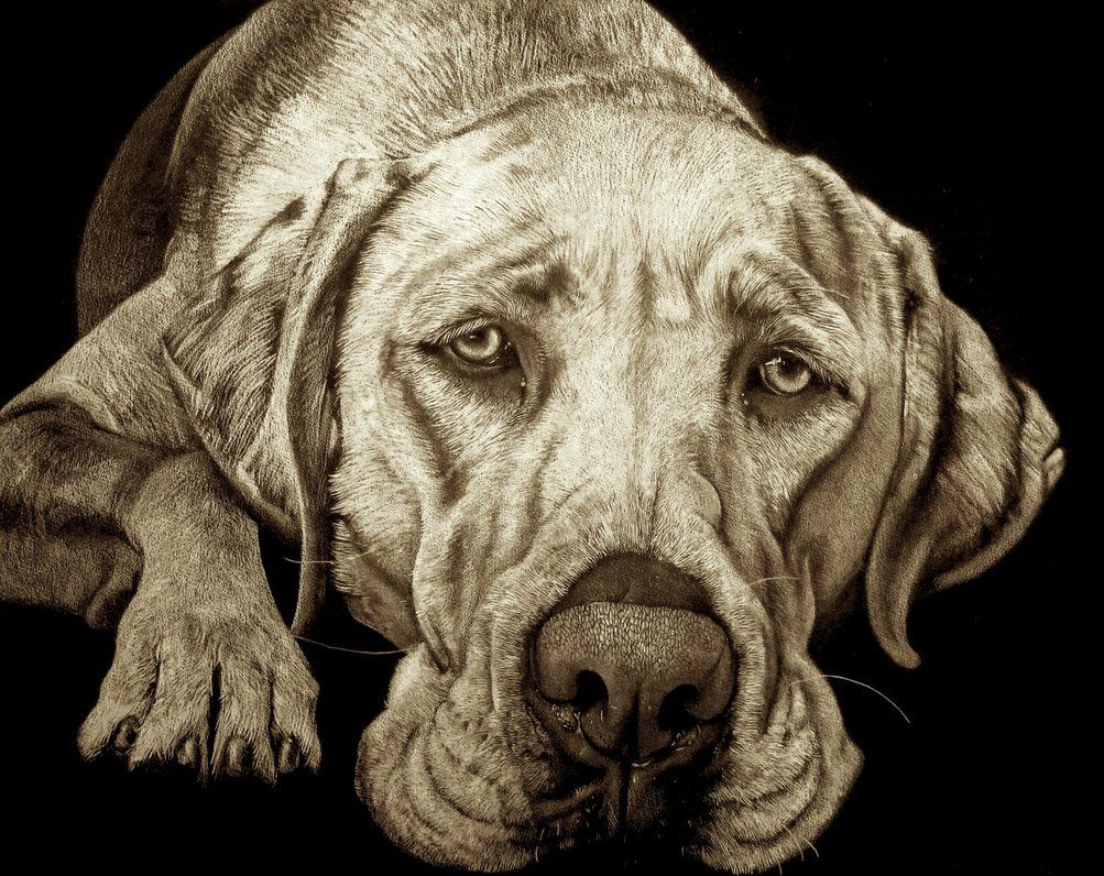 White pencils and charcoal on black paper 50x70cm (~JacopoPfrang)