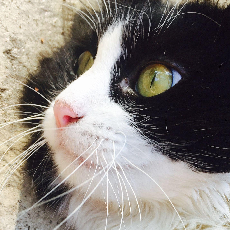 Cat catlover blackandwhite my aunts cat cat lovers