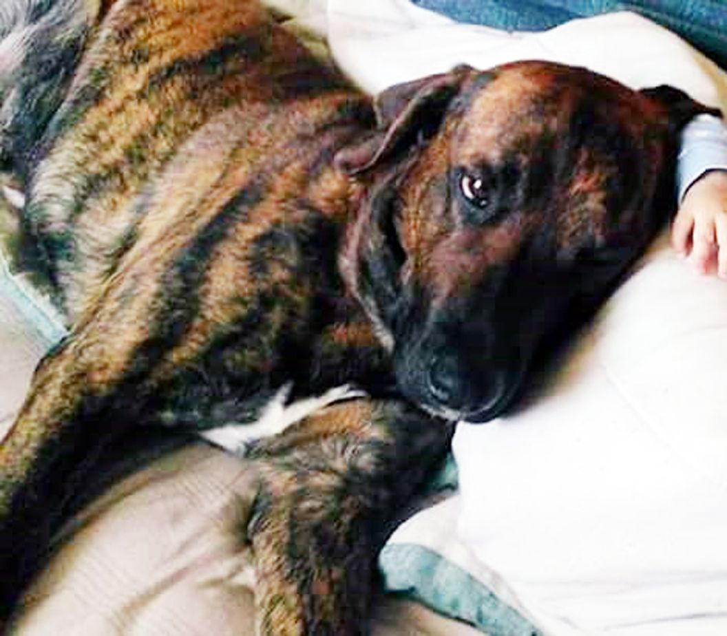 Lost Dog Male Cleveland, OH, USA 44122 Losing a dog