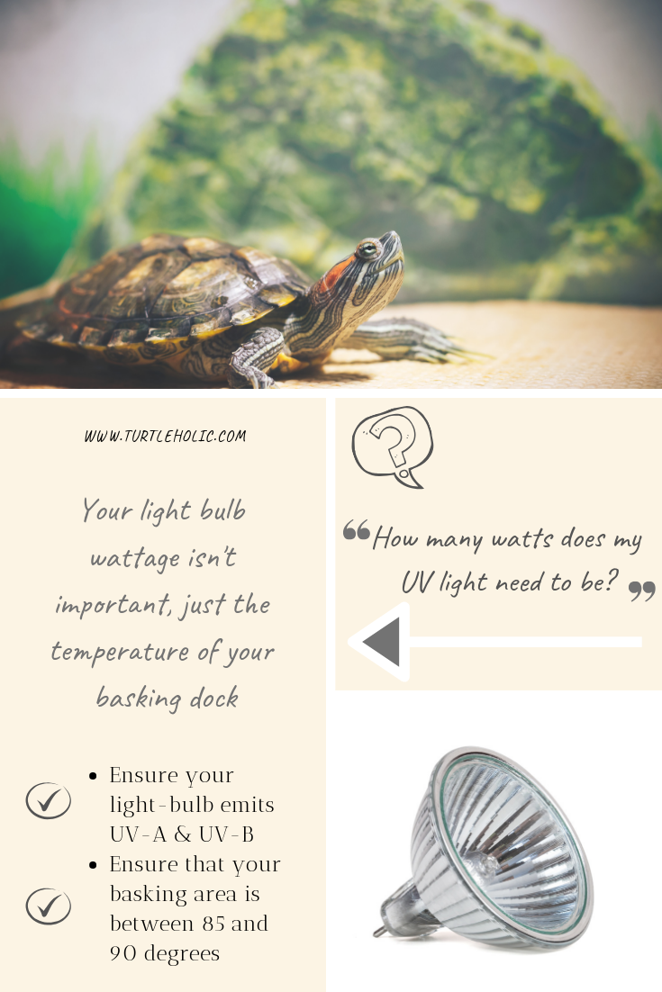 The Best Uv Light Wattage For Turtles Pet Turtle Turtle Pet Turtle Care