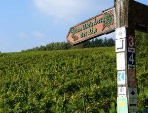 Wandern am Rheinsteig, Weinberg der Ehe bei Eltville