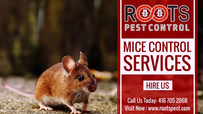 Mice Control Services Mice control, Rat control, Pest
