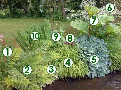 1 sorghastrum nutans 39 indian steel 39 2 foug re femelle 3 buis commun en spirale 4 carex - Erable du japon vert ...
