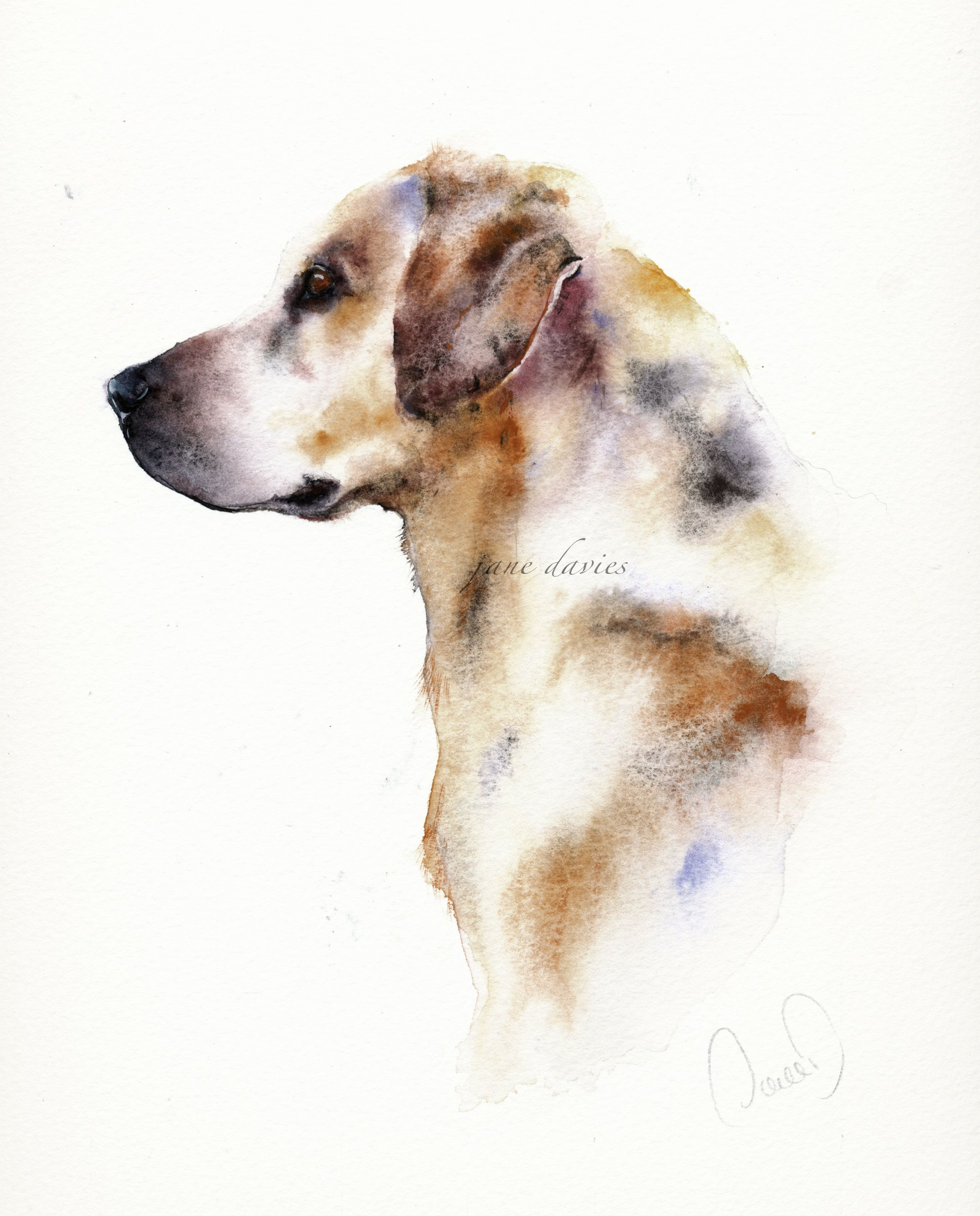 Labrador In Watercolour By Artist Jane Davies Watercolor Pet