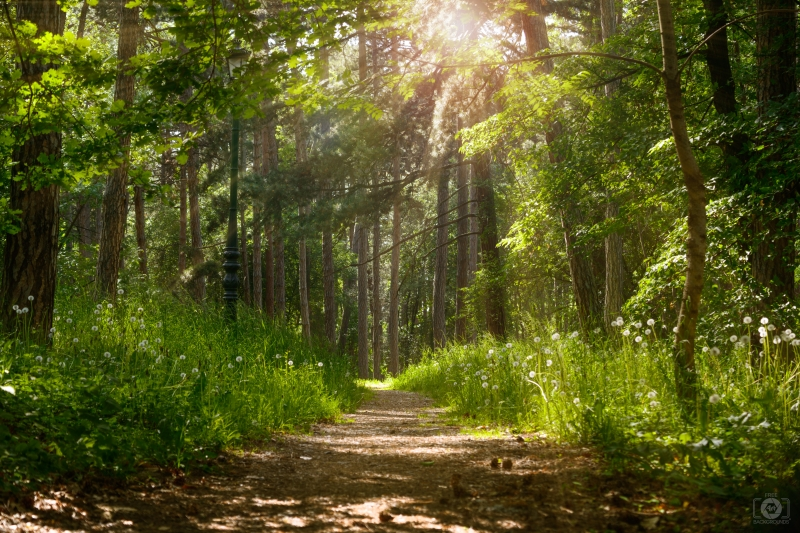 Forest Sunlight Background In 2020 Landscape Trees Background Nature Backgrounds
