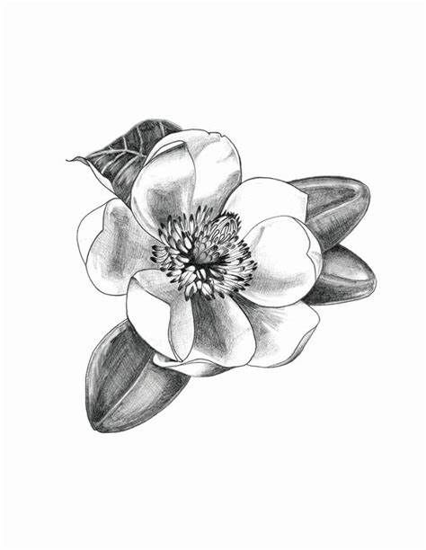 Magnolia Flower In Graphite Pencil Magnolia Tattoo Small Tattoos Girl Rib Tattoos