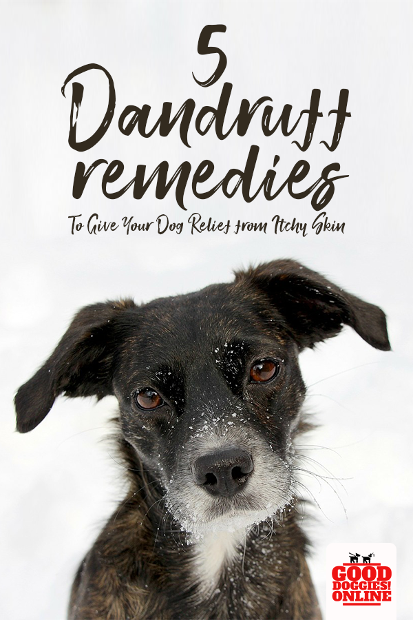 Dogs Get Dandruff Just Like People Do If Your Pup Suffers From Dog Dandruff Check Out These Remedies That Will Stop Dog Dandruff Dog Dry Skin Dandruff Remedy
