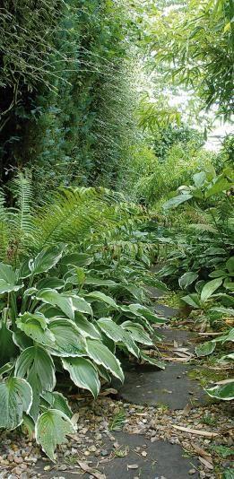 Ombre permanente que planter en sous bois marre for Amenagement jardin ombre