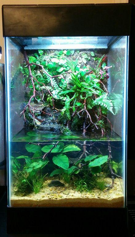 15 Gallon Paludarium Plantedtank Indoor Aquatic Environments