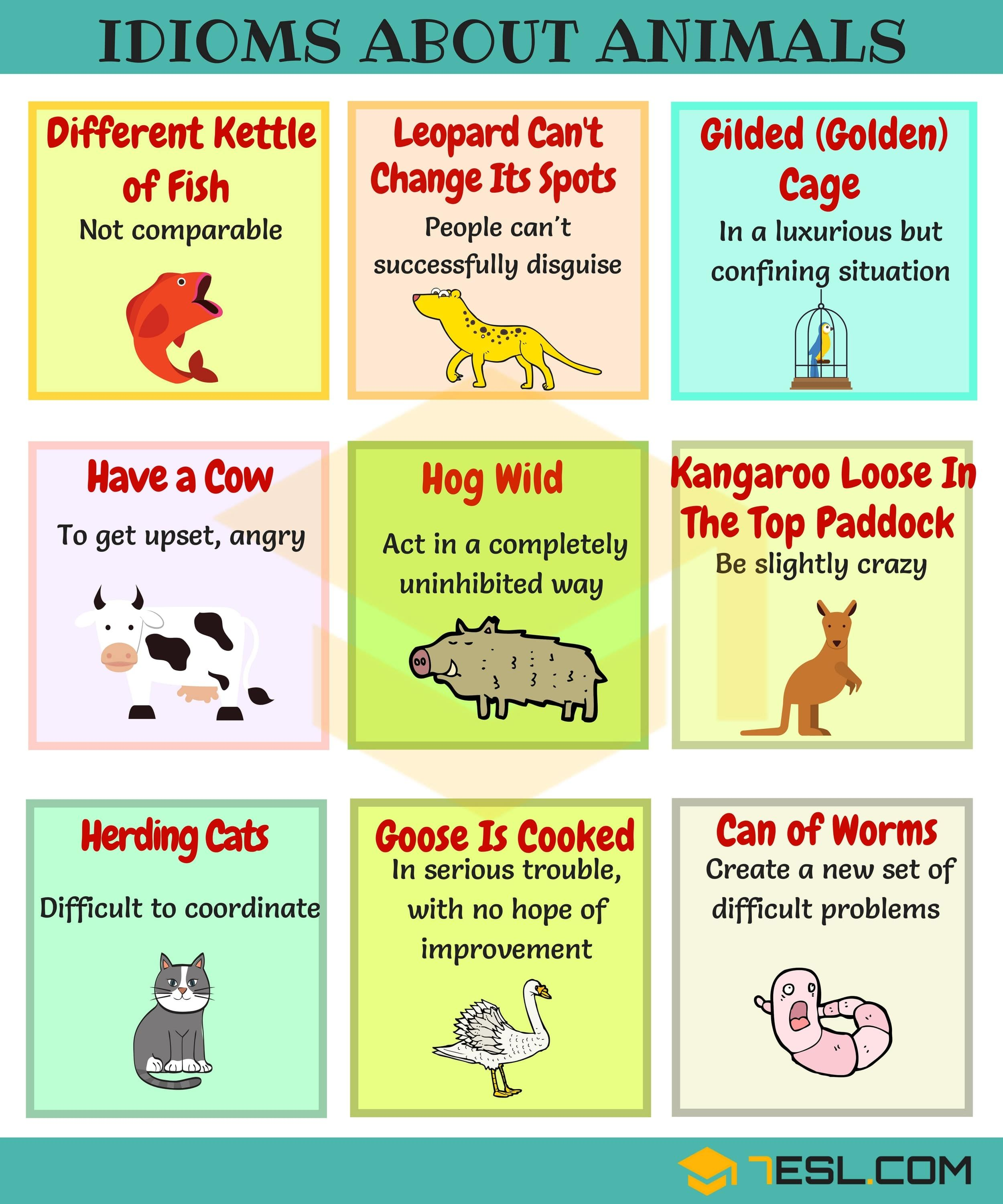 85 Amazing Animal Idioms In English A To E English English