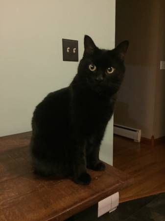 Lost Black Cat West Hartford (West Hartford) hide this