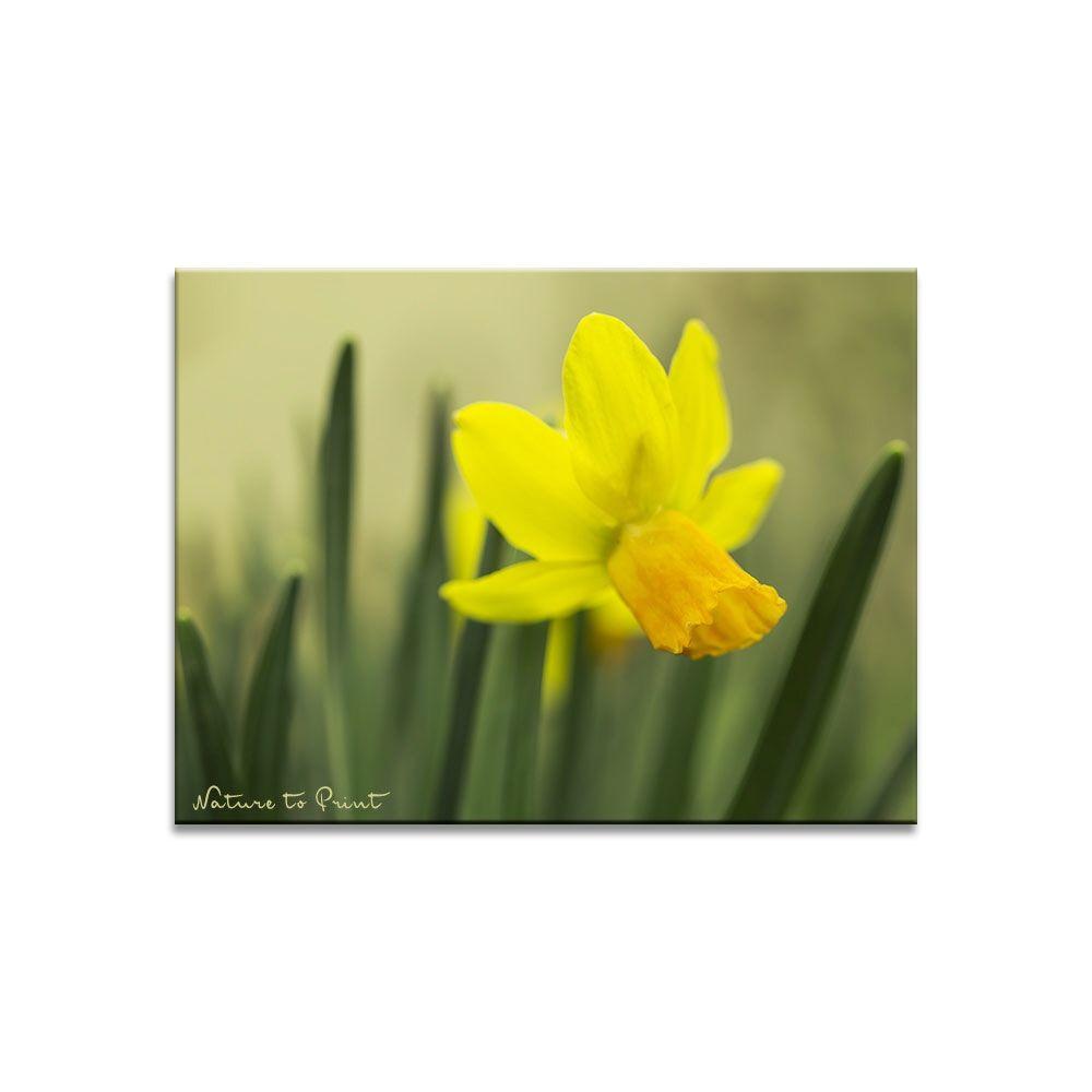 Blumenbild auf Leinwand, Fototapete oder Kunstdruck:  Tete-a-tete im Frühlingsgarten