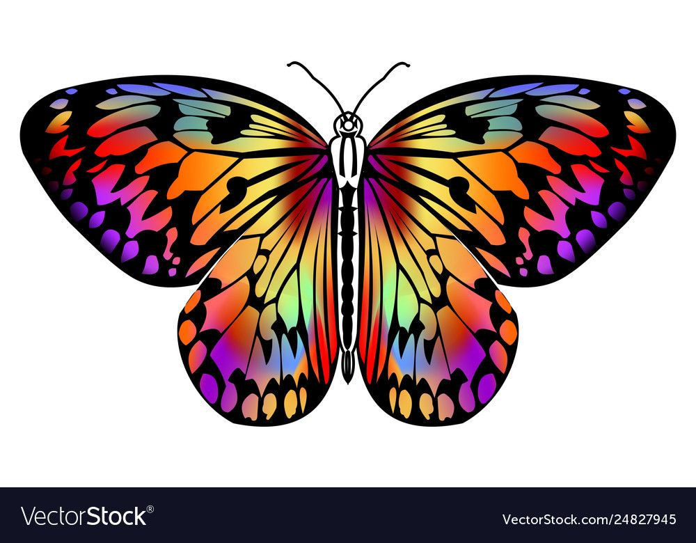 Butterfly drawing in vivid colors in black outline